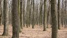 Глубина леса