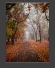Осенний тоннель