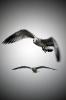 чайки в дозоре