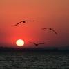 И небо улыбнулось чайками, румянцем солнце залило